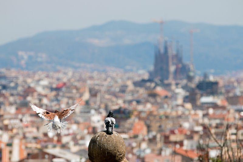 Barcelona olympic park2