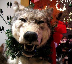 Pub_199_wolf1